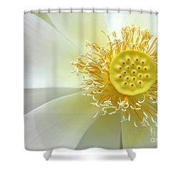 Pastel Lotus Too Shower Curtain by Sabrina L Ryan