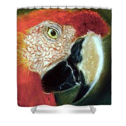 Pastel Of Red On The Head  Shower Curtain by Antonia Citrino