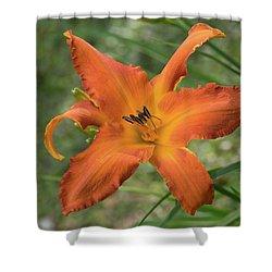 Pastel Orange Lily Shower Curtain
