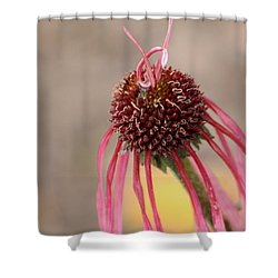 Pastel Perfection Shower Curtain by Deborah  Crew-Johnson