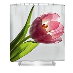 Pastel Pink Shower Curtain