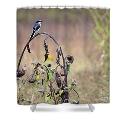 Pastoral Scene Bird On Sunflower Shower Curtain