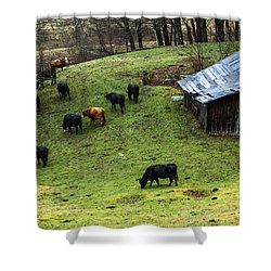 Pasture Field And Cattle Shower Curtain by Thomas R Fletcher
