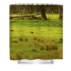 Pasture In Boranup Shower Curtain by Cassandra Buckley