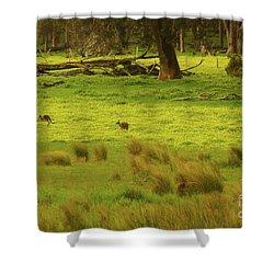 Pasture In Boranup Shower Curtain