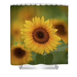 Patch Of Sunflowers Shower Curtain