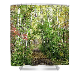 Path In The Woods 3 Shower Curtain