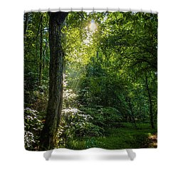 Path Lighting Shower Curtain