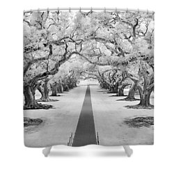 Path Of Dreams  Shower Curtain