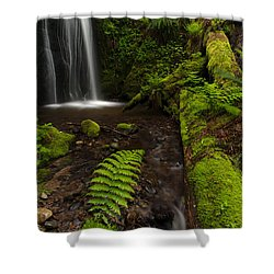 Path Of Life Shower Curtain by Mike Reid