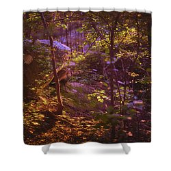 Path Of The Peacemaker Shower Curtain