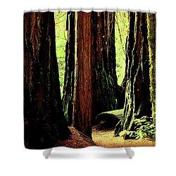 Path Through The Forest Edge . 7d5432 Shower Curtain