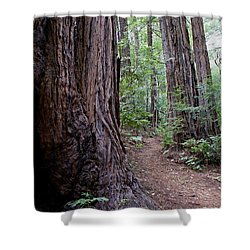 Pathway Through A Redwood Forest On Mt Tamalpais Shower Curtain