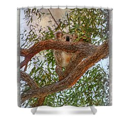 Shower Curtain featuring the photograph Patience Brings Koalas by Hanny Heim