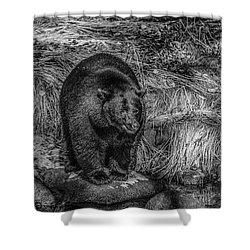 Patient Black Bear Shower Curtain