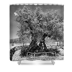 Patriarch Olive Tree Shower Curtain