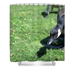 Pattern 311 _ Love Eat Shower Curtain