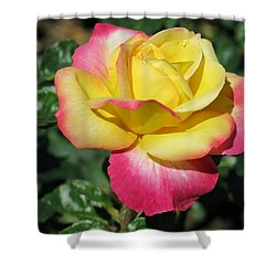 Peace And Love Rose Shower Curtain by Betty Buller Whitehead