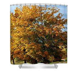 Peaceful Country Road Shower Curtain by Will Borden