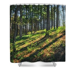 Peaceful Forest 4 - Spring At Retzer Nature Center Shower Curtain by Jennifer Rondinelli Reilly - Fine Art Photography