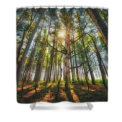 Peaceful Forest 5 - Spring At Retzer Nature Center Shower Curtain by Jennifer Rondinelli Reilly - Fine Art Photography