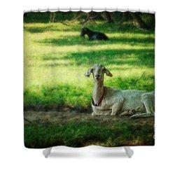 Peaceful Pasture Shower Curtain
