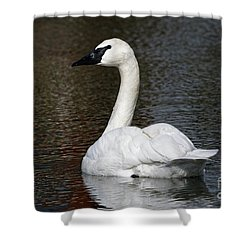 Peaceful Swan Shower Curtain