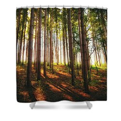 Peaceful Wisconsin Forest 2 - Spring At Retzer Nature Center Shower Curtain by Jennifer Rondinelli Reilly - Fine Art Photography