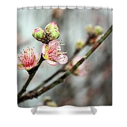 Peach Blossom Shower Curtain by Kristin Elmquist