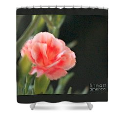 Shower Curtain featuring the photograph Peach Dream by Cathy Dee Janes