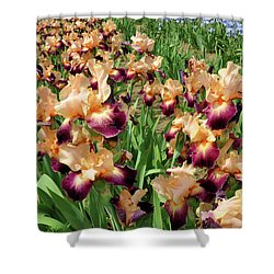Peach Iris Shower Curtain by Diane Lent