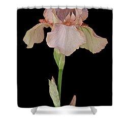 Peach Iris Shower Curtain by Michael Peychich