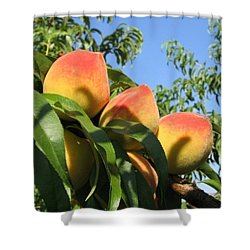 Peaches Shower Curtain by Barbara Yearty