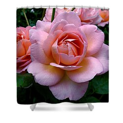 Peachy Pink Shower Curtain by Rona Black