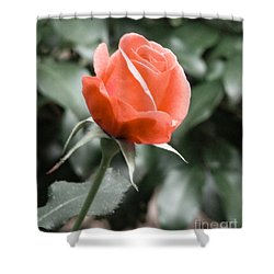 Peachy Rose Shower Curtain