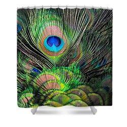 Peacock Brilliance Shower Curtain by Emilia Brasier