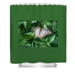 Peacock Butterfly II Shower Curtain by Suzanne Gaff