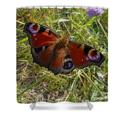 Shower Curtain featuring the photograph Peacock Butterfly by Jean Bernard Roussilhe