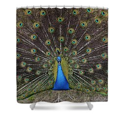 Shower Curtain featuring the photograph Peacock Displaying Feathers by Bradford Martin