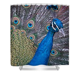 Shower Curtain featuring the photograph Peacock by Frank Stallone