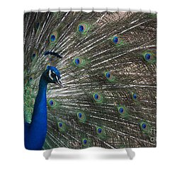 Shower Curtain featuring the photograph Peacock II by Lisa L Silva