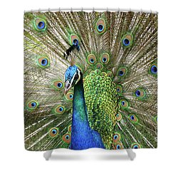 Shower Curtain featuring the photograph Peacock Indian Blue by Sharon Mau