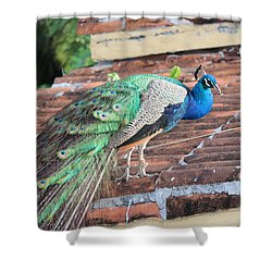 Peacock On Rooftop Shower Curtain