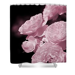 Peacock Pink Cabbage Roses On Black Shower Curtain
