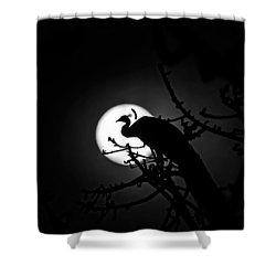 Peacock Roosting Against Full Moon. Shower Curtain by Ramabhadran Thirupattur