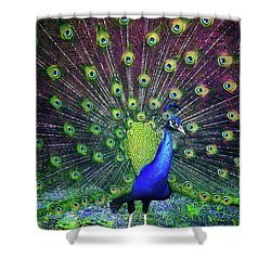 Peacock Series 9801 Shower Curtain