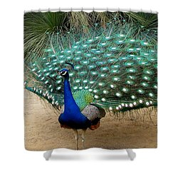 Peacock Showing All Feathers Shower Curtain by Patricia Barmatz