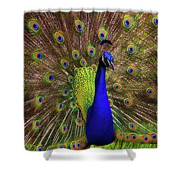 Peacock Showing Breeding Plumage In Jupiter, Florida Shower Curtain by Justin Kelefas
