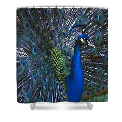 Shower Curtain featuring the photograph Peacock Splendor by Marie Hicks
