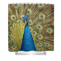 Peacock Splendor Shower Curtain